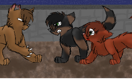 What warrior cat rouge do you like the best?
